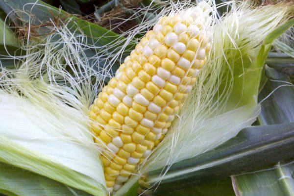 FMarket Fresh Corn